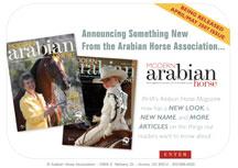 eNewsletter Design Services Arabian Horse Magazine Publication