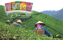 Direct Mail Postcard Design TeaBling Unique Chinese Tea